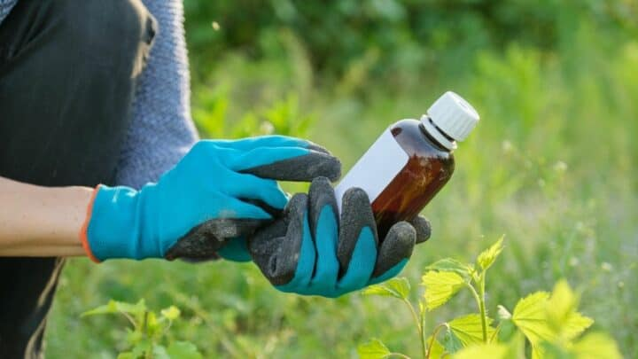 5 Best Tomato Plant Fungicides – A Buyers Guide