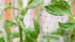 Tomato plant protectors