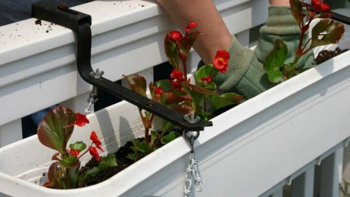 Best Soil for Begonias — Here is the Answer!