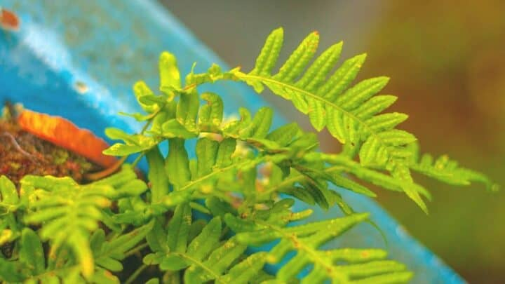 3 Reasons Why Ferns Become Crispy — And How to Fix it