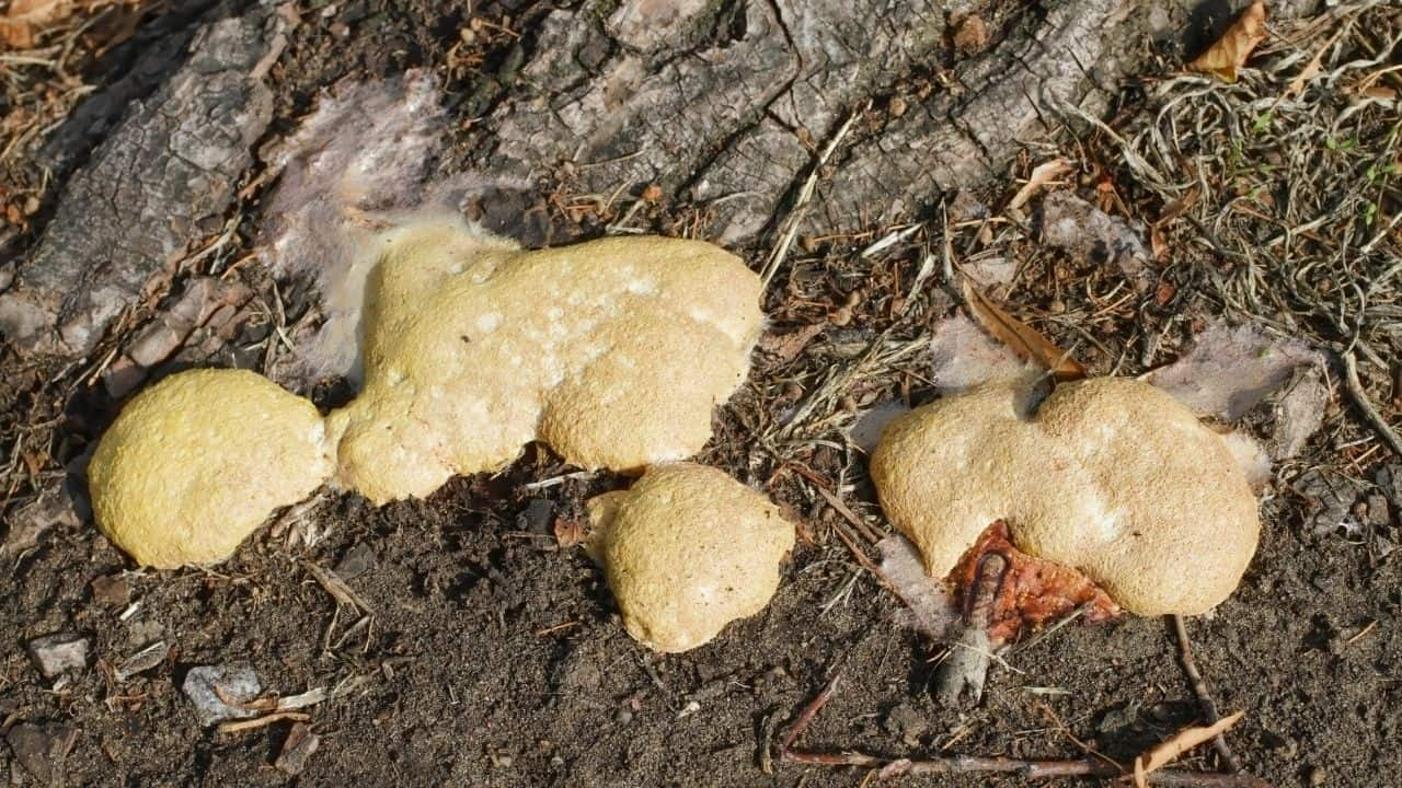 Dog Vomit Slime