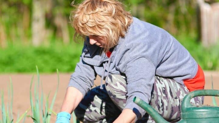 4 Ways to Get Rid of Moss in Garden Beds