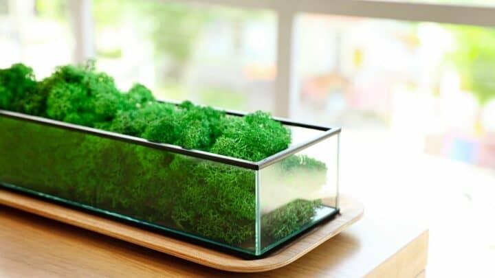How to Grow Moss Indoors — Top Tips