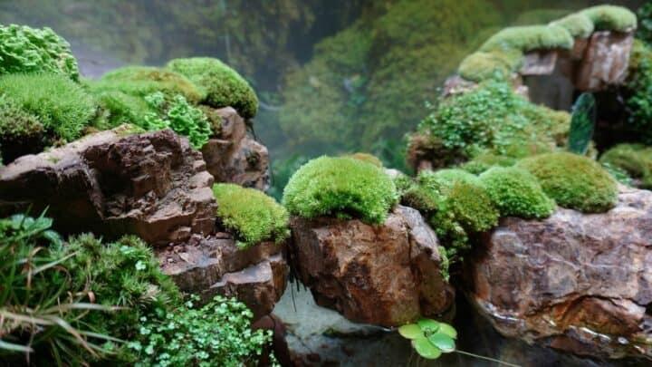 How to Grow Moss in a Terrarium — An In-depth Guide