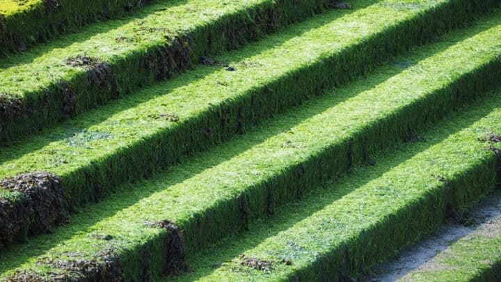 Growing Moss on Concrete — Here's How it's Done