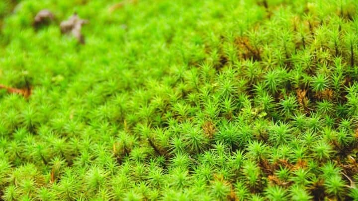 How to Keep Moss Alive — Our Top Tips