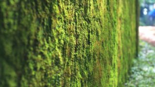 How to Make a Living Moss Wall
