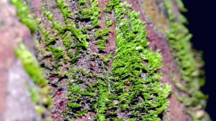 How to Remove Moss from Trees — Top Tips