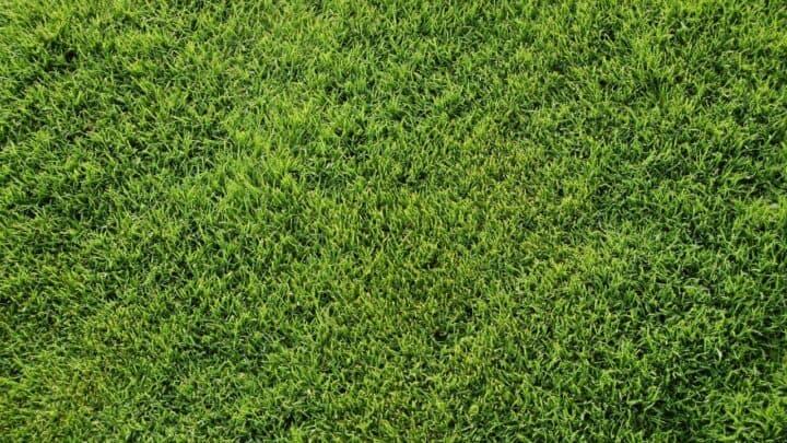 Repair Bermuda Grass Lawn Like A Pro