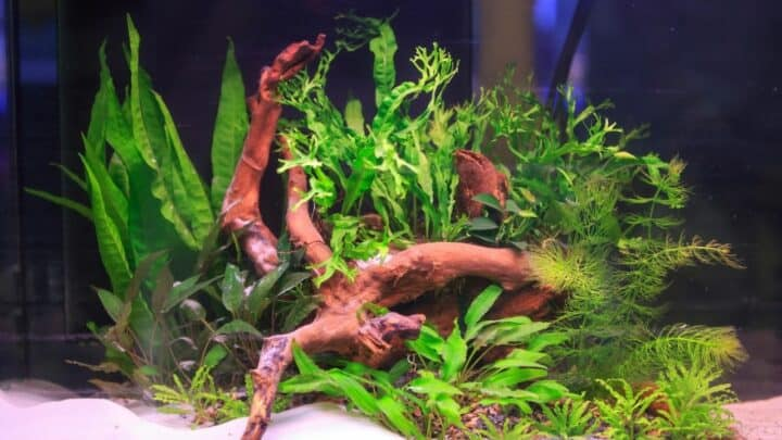 How to Trim Aquarium Plants — In 5 Easy Steps