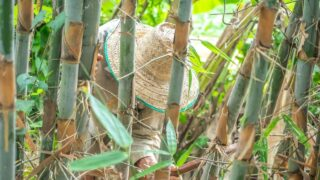 How to Trim a Bamboo Plant