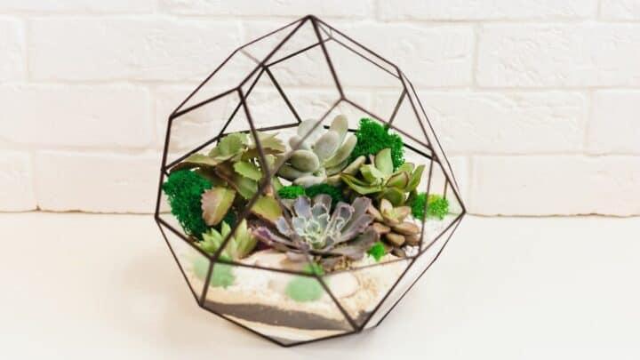 How to Make a Succulent Terrarium — In-depth Guide