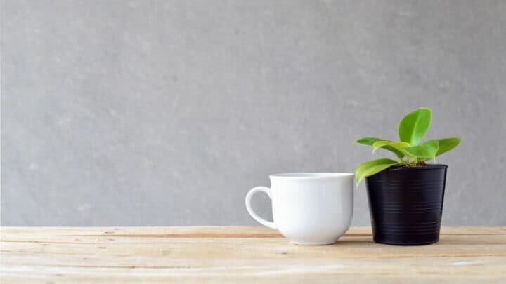 How Often to Water Pothos – What You Should Know