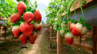 What to Plant After Strawberries