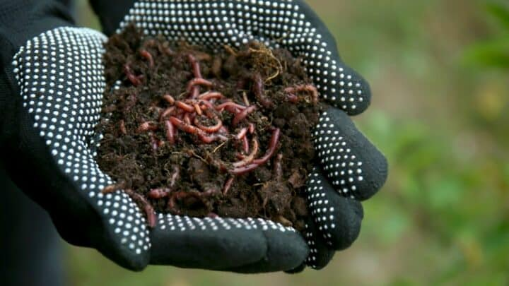 Why Are There No Worms In The Soil? The Answer!
