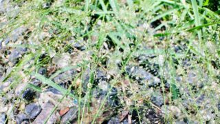 Best Time to Plant Bermuda Grass Seed
