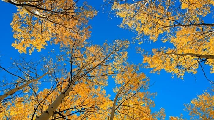 The Best Time to Plant Trees in Utah — Oh!