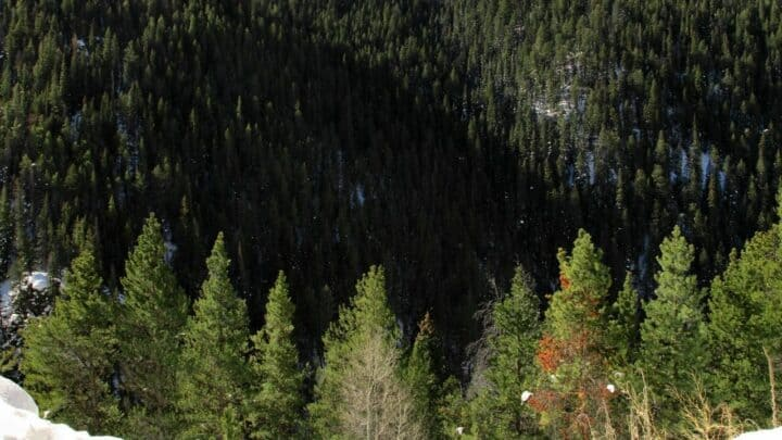 Best Trees to Plant in Colorado – Amazing!