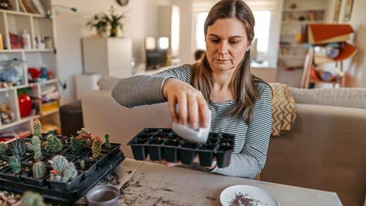 How to Bottom Water Houseplants — Pro Tips!