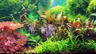 How to Clean Aquarium Plants before Planting