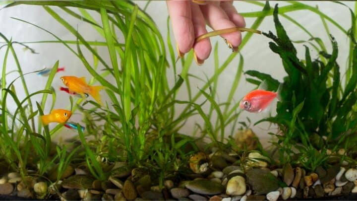 How to Plant Aquarium Plants in Gravel — Pro Tips!