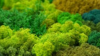 How to Preserve Moss