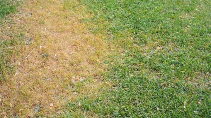 How to Revive Dead Grass in 6 Simple Steps