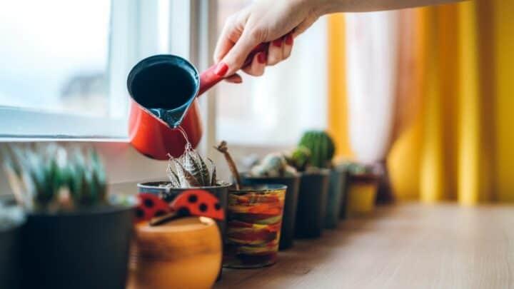 3 Methods to Soften Hard Water for Plants
