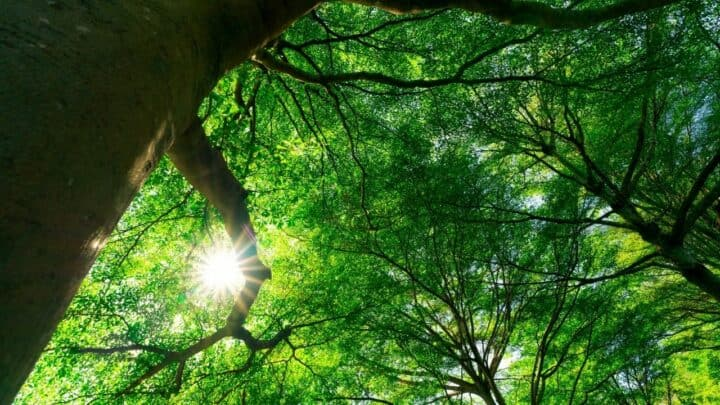 10 Plants That Produce the Most Oxygen