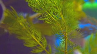 The Best Bushy Aquarium Plants