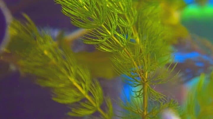 The 11 Best Bushy Aquarium Plants to Grow — Revealed