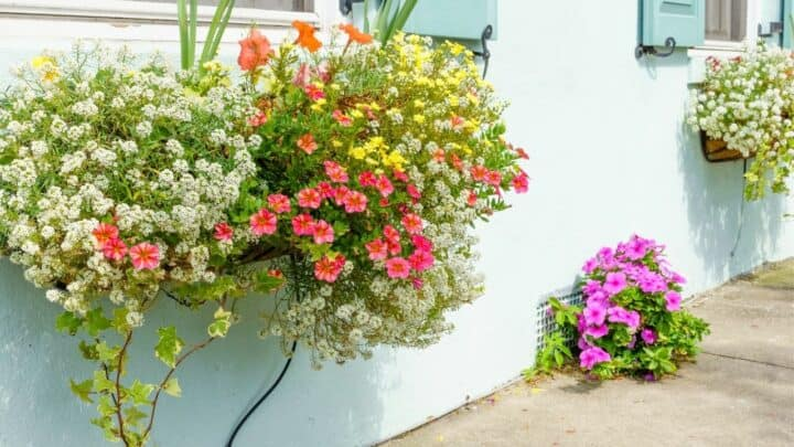 The Best Flowers to Plant in South Carolina