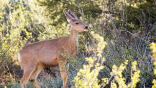The Best Things to Plant for Deer