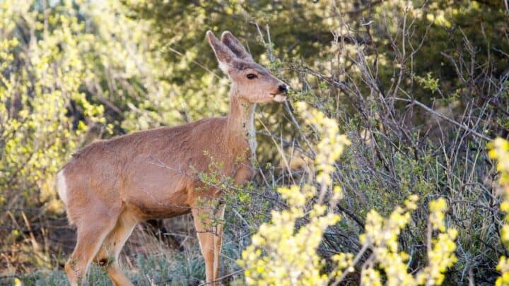 The Best Things to Plant for Deer — Interesting!