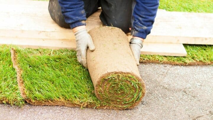 The Best Time to Plant Grass — Oh, I Know Now!