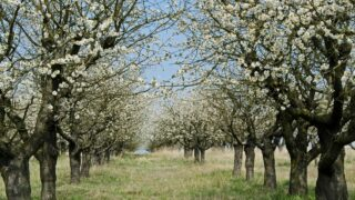 The Best Trees to Plant in Kansas