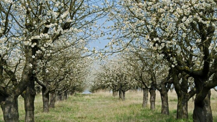The 4 Best Trees to Plant in Kansas