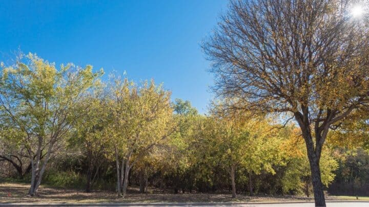 The Best Trees to Plant in North Texas
