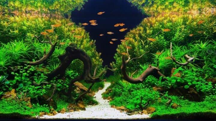 White Fuzz on Aquarium Plants — What It Is!
