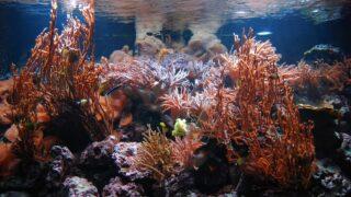 How Many Hours of Sunlight Do Aquarium Plants Need