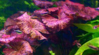 The Best Colorful Aquarium Plants